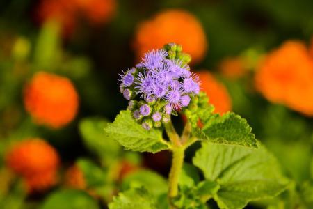 花, 菜园, 花, 绿色, 自然, 植物, 春天