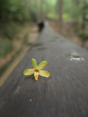 花, 自然, 自然, 花香, 黄色, 公园