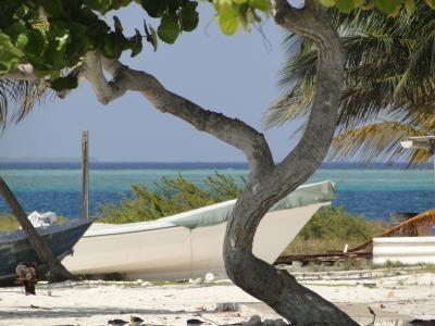 树, 海滩, 小船, 海, 地平线, 水, 树干