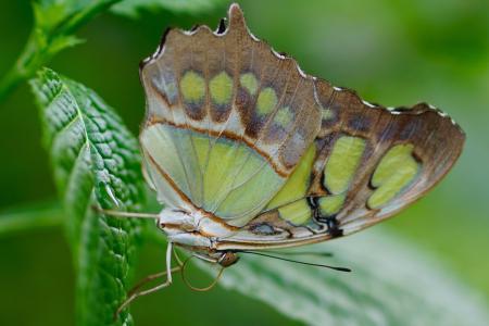 蝴蝶, 异国情调, 昆虫, 热带, 动物, 翼, 自然