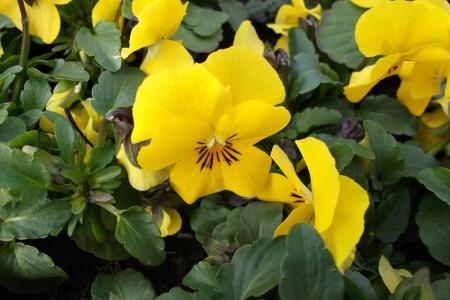 紫罗兰色, 花, 春天, 自然, 花, 多彩, 花园