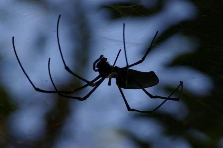 蜘蛛, 令人毛骨悚然, 昆虫, 蜘蛛网, 黑暗, 可怕, 黑色
