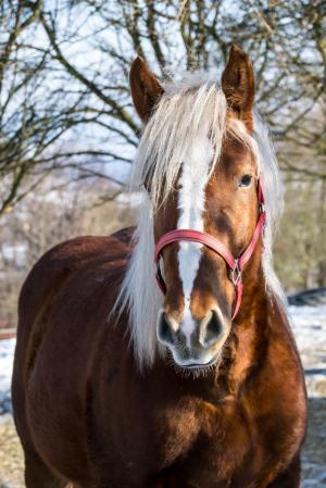 马, 鬃毛, 蚱蜢, 头, 动物, 动物, 肖像