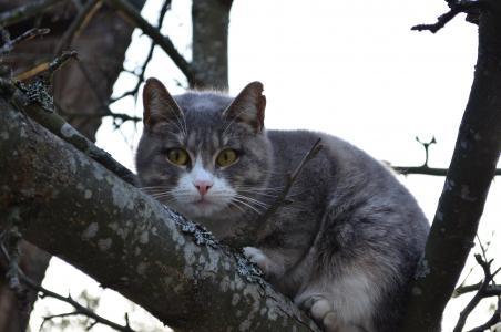 猫, 树上的猫, 分公司, 树, 眼睛, 毛茸茸的猫, 鼻子