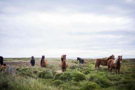 动物, 农场, 马, 自然