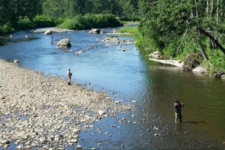 河, 捕鱼, 男子, 渔夫, 锚河, 阿拉斯加, 抓到