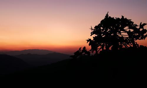 景观, 日落, 剪影, 树, 地平线, 黎明, 自然