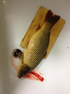 死, 鱼, 动物, 自然, 抓到, 原始, 食品
