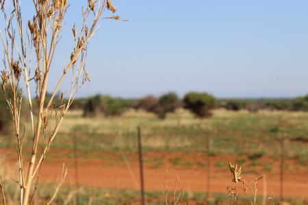 布什, 南非, 非洲, 南, 自然, 野生, 野生动物