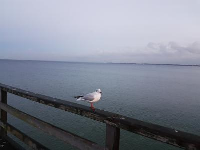 海, 波罗地海, 海鸥, 鸟, 自然, 水, 户外
