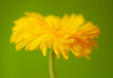 花, 开花, 绽放, 植物, 宏观, 自然, 关闭