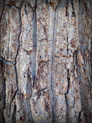 树皮, 树, 木材, 松树, 背景, 摘要, 皮肤