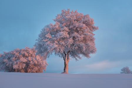 景观, 自然, 天空, 雪, 树木, 冬天