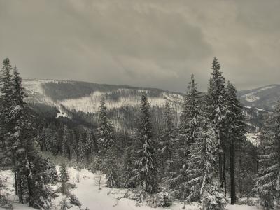 冬天, 树木, 雪, 感冒, 弗罗斯特, 嗖嗖声, 滑雪