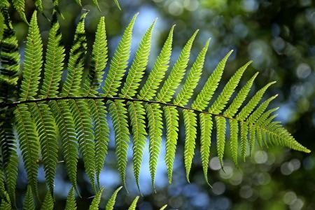 绿色, 蕨类植物, 叶, 自然, 白天, 绿色的颜色, 没有人