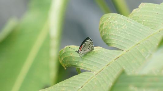 厄瓜多尔, 蝴蝶, 绿色, 世界, 自然, 环境, 自然