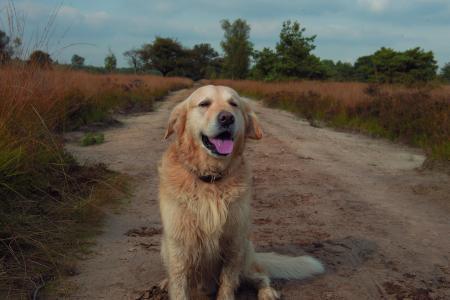狗, 外面, 自然, 森林, 伍兹, 小狗, 草