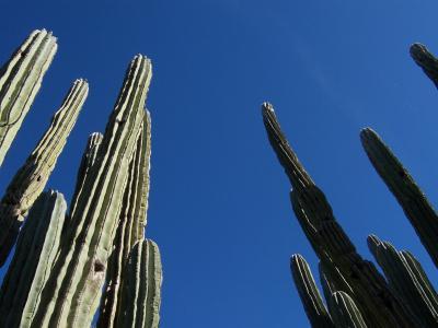 仙人掌, 沙漠, 亚利桑那州, 景观, 自然, 植物, 天空