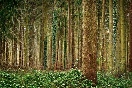 森林, 树木, 自然, 景观, 绿色, 户外, 徒步旅行