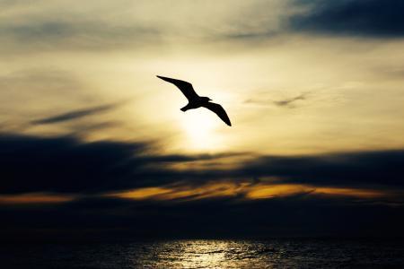 图像, 鸟, 身体, 水, 黄昏, 鸟类, 海洋