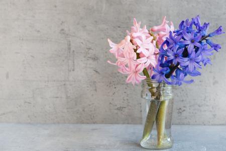 风信子, 花, 粉色, 蓝色, 花瓶, 玻璃, 德科