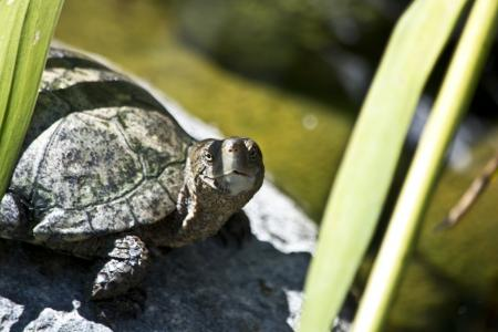 海龟, 两栖类动物, 动物, 野生动物, 野生, 动物学, 物种