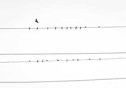 电源, 线, 鸟类, 电源线, 动物, 天空, 鸟
