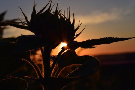 日落, 太阳花, 回光, 天空, 红色, 晚上, 对比
