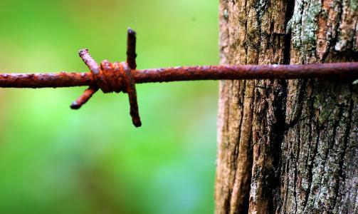 氧化, 带刺的铁丝网, 木材, 自然, 巴斯克家园, 树, 特写
