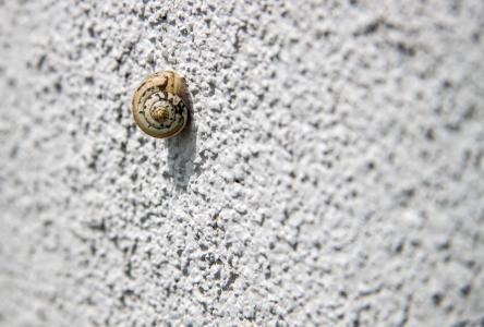 蜗牛, 蜗牛在墙上, 孤独, 测试, 电源, 的目的, 悲伤