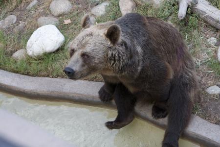 熊, 坐, 棕色, 动物, 野生动物, 哺乳动物, 自然