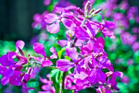 海棠, 花, 罗海棠, 光明, 床上用品厂, 颜色, 眼睛有神