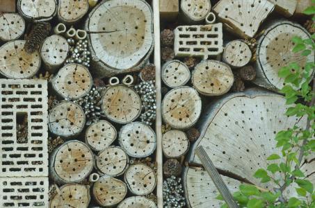 昆虫酒店, 昆虫之家, 昆虫收容所, 昆虫墙, 昆虫盒