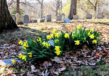 花, 水仙花, 墓地, 公墓