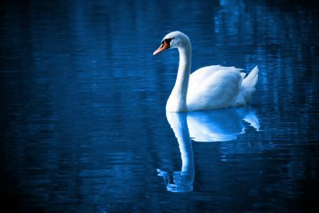 美丽, 鸟, 蓝色, 平静, 颜色, 优雅, 羽毛