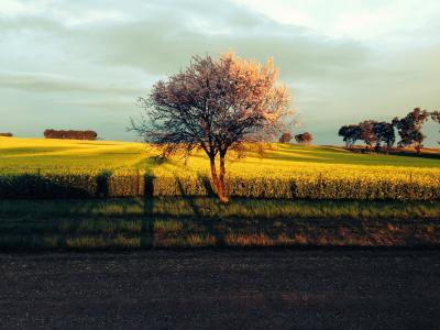 日落, 风暴, 天空, 景观, 颜色, 赛季, 美丽的风景