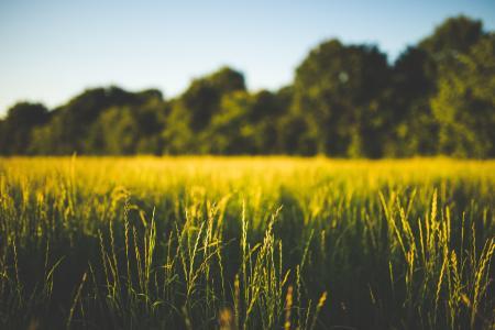 字段, 草, 绿色, 宏观, 自然, 树木