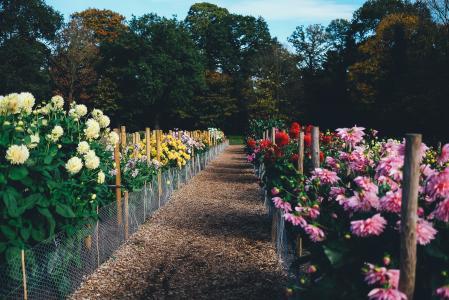 绽放, 开花, 植物区系, 花, 路径, 植物