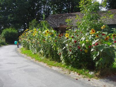 村舍花园, 巨大, 小孩