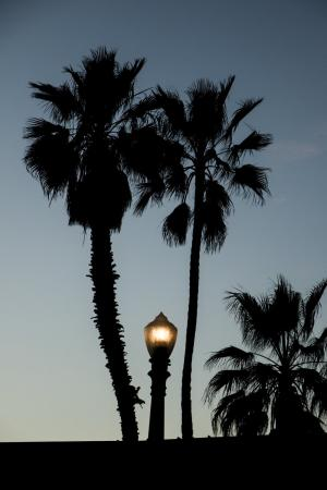 棕榈树街灯