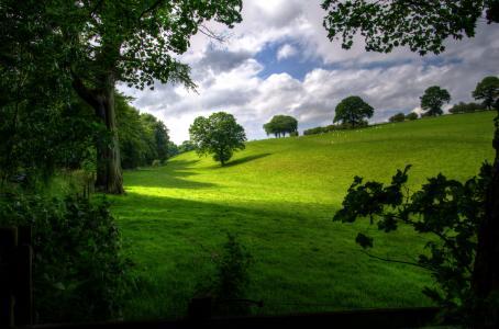 景观, 春天, 木材, 风景名胜, 绿色, 树木, 自然