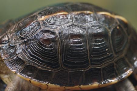 龟壳, 海龟, 装甲师, 铠装, 盔甲, 模式, 结构