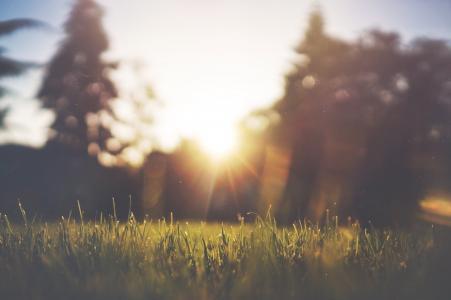 草, 草坪, 绿色, 夏季, 自然, 字段, 草甸