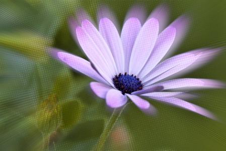 开花, 绽放, 花, 紫色, 影响, photoshop