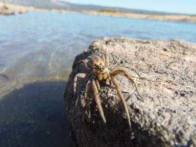 蜘蛛, 狼蛛, 昆虫, 宏观, 自然, 海, 动物