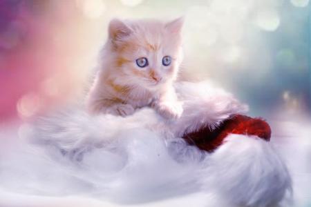 小猫, 灰色, 心, 猫, 圣诞节, 宠物, 年轻的猫