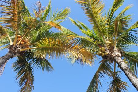 棕榈, 椰子, 树, 微笑, 假日