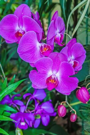 摘要, 芳香族, 安排, 美丽, 绽放, 开花, 植物园
