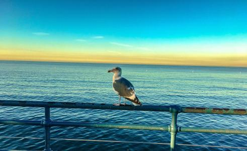 鸟, 景观, 海洋, 自然, 水, 野生鸟类, 水鸟