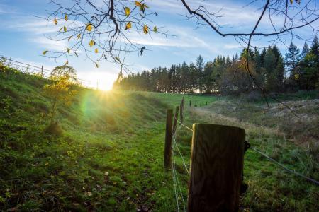 秋天, 太阳, 栅栏, 森林, 字段, 景观, 自然